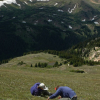 Too much of a good thing: Alpine plants under threat in Rocky Mountain National Park