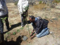 Planting apple seedlings around the clay pot reservoirs. Photo by Tsegay Wolde-Georgis, 2011.