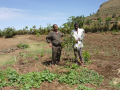 Tsegay and a farmer inspect an established seedling. Photo by Tsegay Wolde-Georgis.