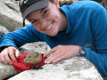 Student Taylor Stratton releases a pika near the Mountain Research Station, July 2012.
