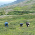 Students pick blueberries to supplement their lunches during a field trip. Photo by Astrid Ogilvie, August 2014.