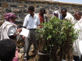 The residents of Atebes take charge of young apple trees. Photo by Tsegay Wolde-Georgis, summer 2010.